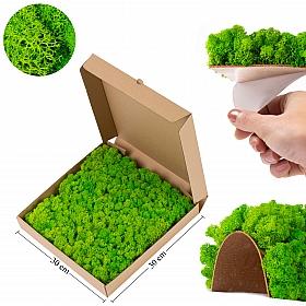Panou licheni conservati 30x30cm, verde deschis Licheni Pizza box