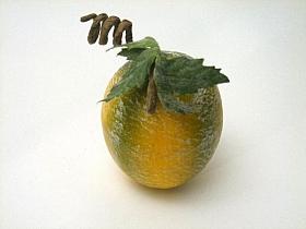 Pepene galben HO Cantalup