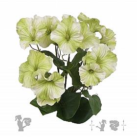Petunia 33 cm verde