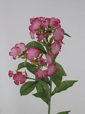 Phlox 70 cm HO roz