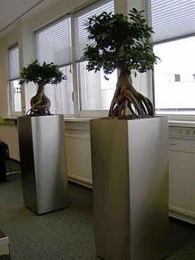 Planta Bonsai naturala in ghiveci Superline trend pe inel