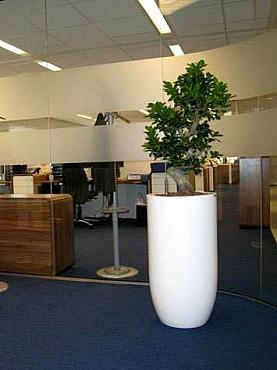 Planta Bonsai naturala in ghiveci Top Plus