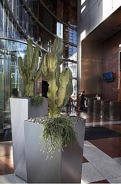 Planta naturala Cactus in ghiveci metalic patrat Superline Trend Conisch pe inel