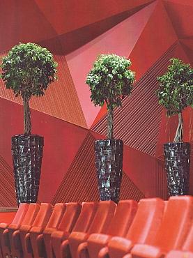 Planta naturala Ficus macrophulla in ghiveci Plants Of Choice Ocean