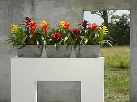 Planta naturala Guzmania in ghiveci sinyetic Arstone Ella Balcony