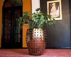Planta naturala in ghiveci ceramic rotund Laos