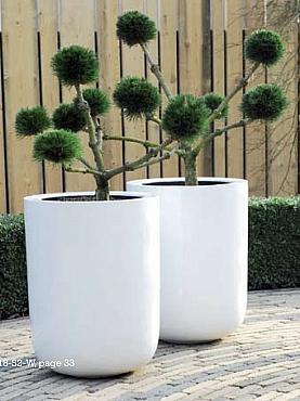 Planta naturala in ghiveci Fiberstone Dice