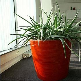 Planta naturala in ghiveci Krappa bamboo 56x51 cm