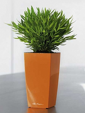 Planta naturala in ghiveci Lechuza Cubico