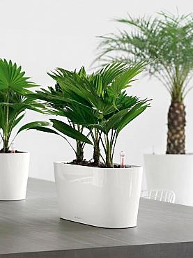Planta naturala in ghiveci Lechuza Delta de fereastra