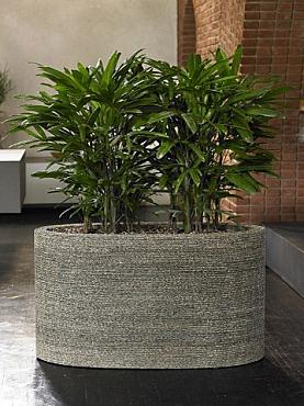 Planta naturala in ghiveci oval natural
