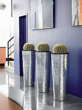 Planta naturala in ghiveci Plants First Choice Elegant Aluminium