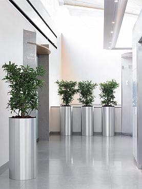 Planta naturala in ghiveci Plants First Choice Parel Aluminium
