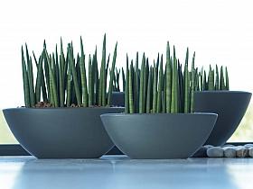 Planta naturala in ghiveci Pure Soft oval