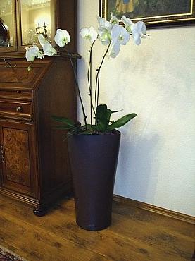 Planta naturala Orhidee in ghiveci Lechuza Delta