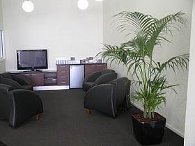 Planta naturala Palmier in ghiveci Lechuza Quadro