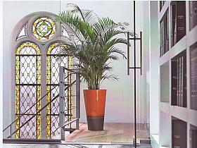 Planta naturala Palmier in ghiveci Rainbow