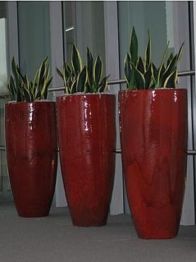 Planta naturala Sanseveria in ghiveci ceramic rotund Oxblood Red Elegant