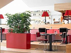 Planta naturala Scheflera arboricola in ghiveci Plants First Choice Prestige Plus