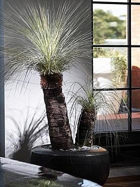 Planta Xanthorrhoea glauca ceramic rotund De Luxe Eggmosaic