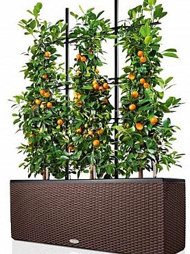 Plante naturale cu fructe in ghiveci Lechuza Cottage Trend