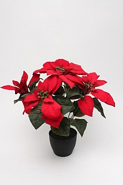 Poinsettia 30 cm HO rosu