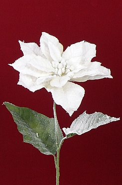 Poinsettia 71 cm alb