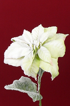 Poinsettia D22xH71 cm verde