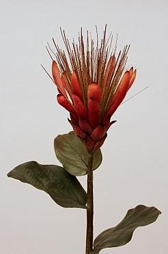 Protea D4xH80 cm HO portocaliu