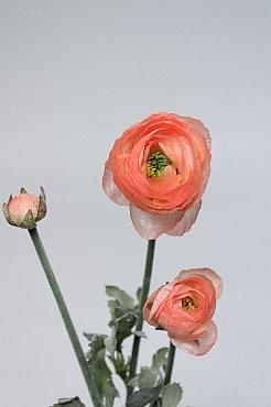 Ranunculus D4xH63 cm HO roz - somon