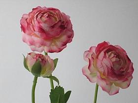 Ranunculus D7x6x3xH60 cm HO roz