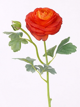 Ranunculus D9xH43 cm portocaliu