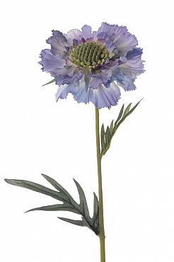 Scabiosa caucasica D10xH35 cm albastru