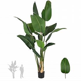 Strelitzia nicolai artificiala H200cm cu 13 frunze Pasarea paradisului