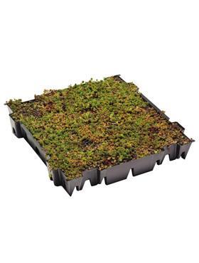 Substrat Sedum Tray 49x49x8 cm