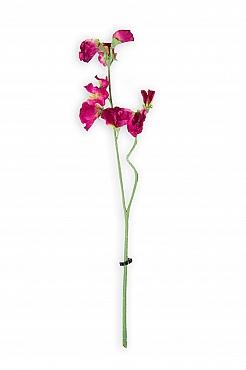 Sweet pea D5xH40 cm roz cyclame Lathyrus