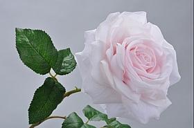 Tradandafir D15xH76 cm roz DE