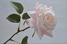 Tradandafir D8xH33 cm roz DE