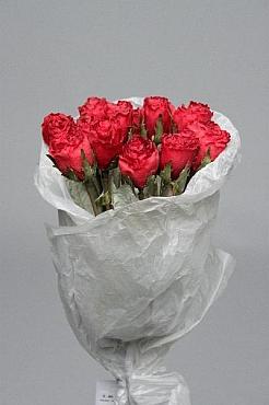 Trandafir 45 cm HO rosu