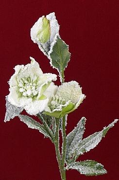 Trandafir 58 cm verde