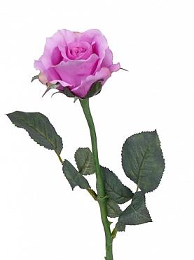 Trandafir Alice D8xH58 cm fuchsia