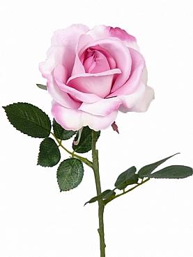 Trandafir Carol D9xH37 cm roz