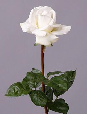Trandafir Caroline 70 cm alb