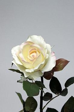 Trandafir Chianti D8xH95 cm HO crem