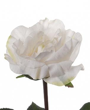 Trandafir Colin 35 cm alb