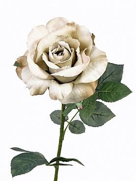 Trandafir Colin Vintange D12x6xH71 cm champagne