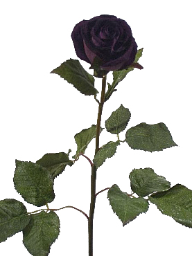 Trandafir de catifea HO mov