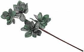 Trandafir Dessert D8xH50 cm HO verde