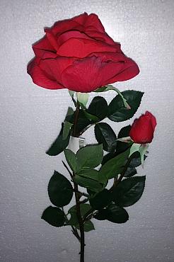 Trandafir Elisabeth D11xH80 cm rosu