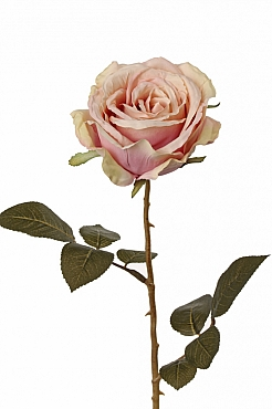 Trandafir Milan Allure 64 cm roz